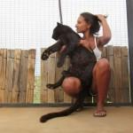 Επίθεση… αγάπης από λεοπάρδαλη (video)