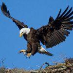 O αετός και το σαλιγκαρι…