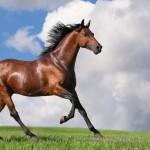 Τα ομορφότερα άλογα στο κόσμο, 15 φυλές που θα σας μαγέψουν