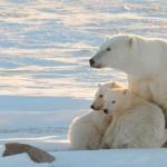Η Αρκτική λιώνει με εφιαλτικούς ρυθμούς