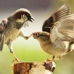 Αστεία πτηνά …