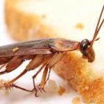 Απαλλαγείτε από τις κατσαρίδες