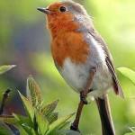 Προστασία των πουλιών το Χειμώνα