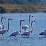 Ναύπλιο: Δείτε τα υπέροχα φλαμίνγκος που ζούν στον υδροβιότοπο (φωτό)
