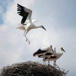 """""""Οι νεαροί πελαργοί δοκιμάζουν τα φτερά τους"""" Γράφει ο Ηλίας Γ. Προβόπουλος"""